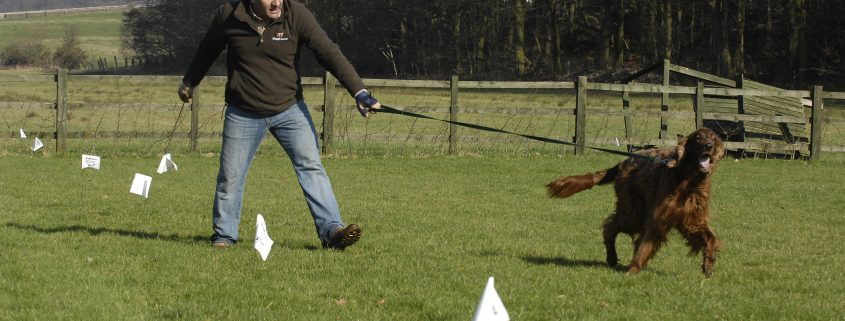 dog fence boundary flags with dog in training