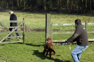 Wire Dog Fence | Installing A Dog Fence Dogfence Offer Full Onsite Installation