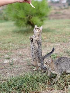 Feeding a wild cat