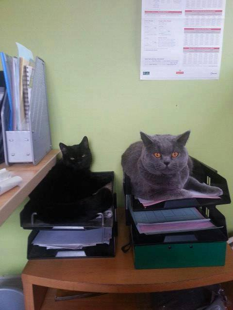 dog fence office cats sitting in filing trays