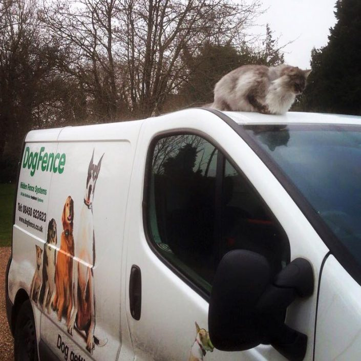 cat sitting on top of dog fence van