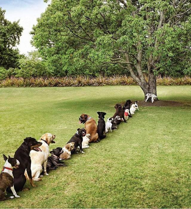 dogs sitting together in a line waiting for their dog fence collars