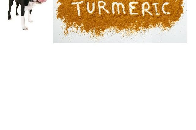 Using turmeric for dogs
