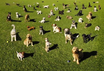 Large group of dogs with no dog fence collars