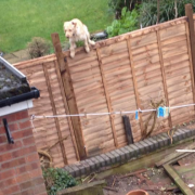 Dog climbing out of garden