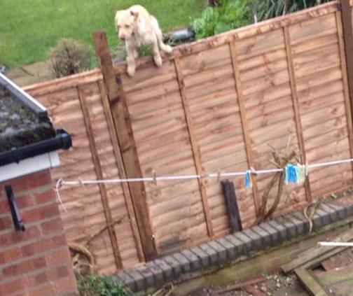 Dog climbing out of garden