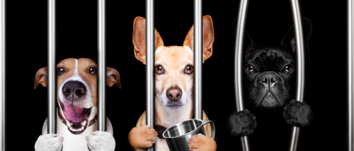 Is It Legal To Use An Electric Dog Fence To Keep My Pet Safe