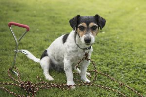 dog proof fencing can be using a tether