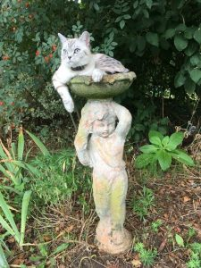 cat in bird bath wearing dog fence collar
