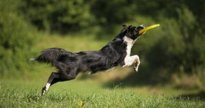 stop dogs from escaping by playing with frisbee