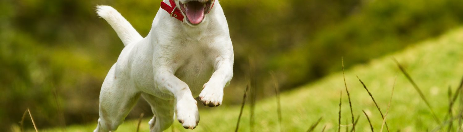 containment fence lets dog run free in field