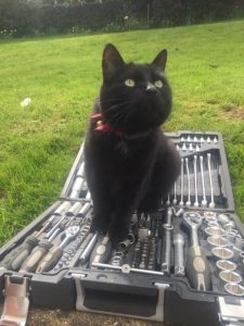 black cat wearing cat fence collar sat on tool box