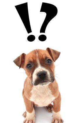 dog fence ideas - dog with question mark
