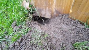 dog fencing ideas can go wrong when the dog digs under the close board fence and makes a hole!