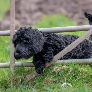 invisible dog fence to stop dog going through gate