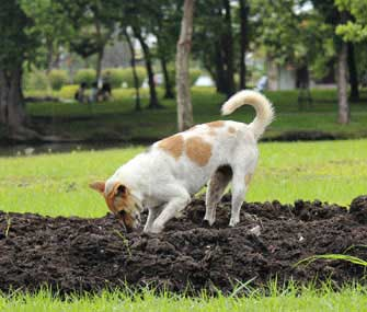 Fencing For Dogs - Stop Dogs Digging