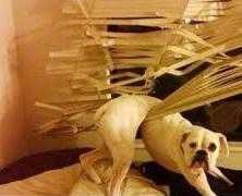 indoor dog fence - pet safety