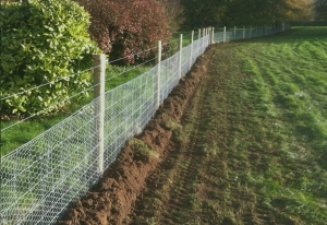 dog fencing for rabbits