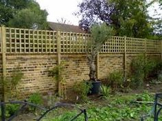 dog fencing using trellis on wall