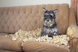 Dog Chewed Sofa